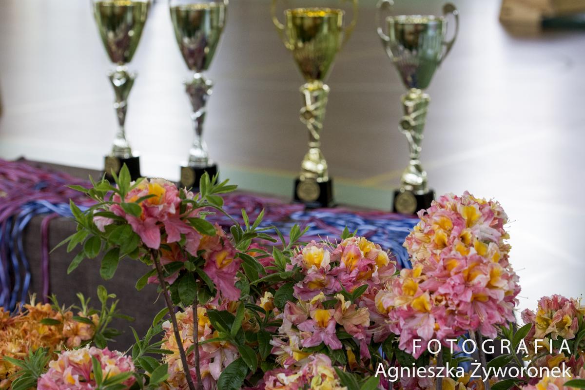 BIEG SAMURAJA- Otwarty Turniej z okazji dnia Dziecka oraz Święta Kwitnących Azalii.