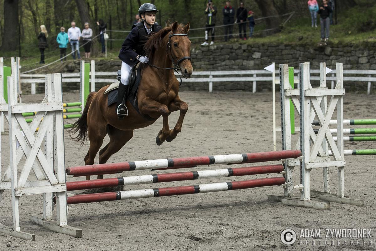 Towarzyskie zawody jeździeckie w skokach przez przeszkody w Kliczkowie